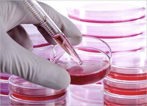 Benefits of Celebre Placenta & Stem Cell