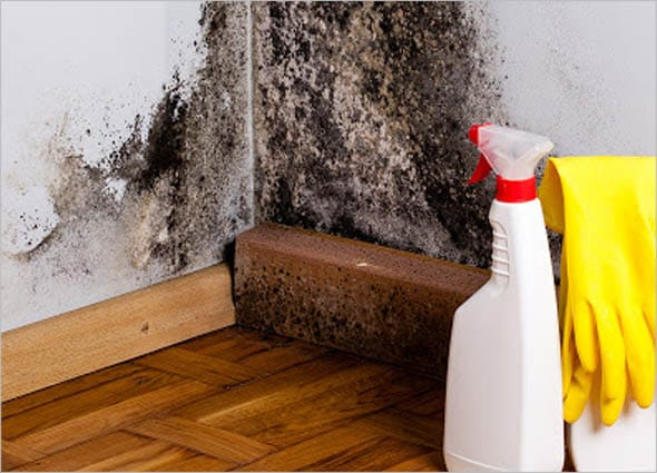 WORSE FOR BLACK MOLD
